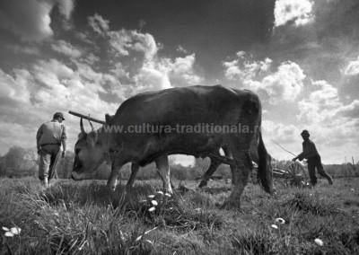 Cornel_Hlupina - Agricultura  - Berbesti
