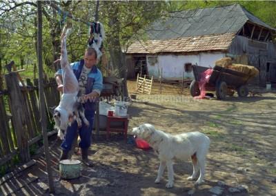 Costas Dumitrescu - Sacrificare - Soconzel