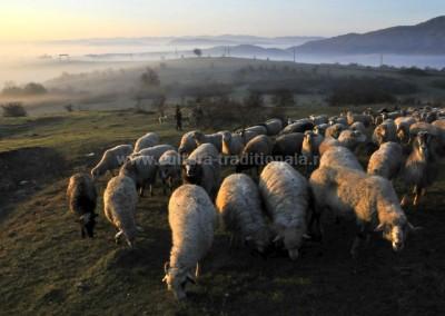 Felician_Sateanu - Rasarit peste Tara Lapusului