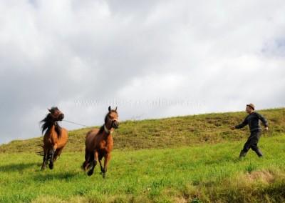 Felician_Sateanu - Vasile si caii lui - Sacel