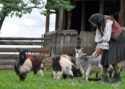Gheorghe_Petrila - Hranind animalele - Borsa