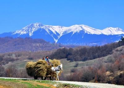 Gheorghe_Petrila - In drum spre casa - Grosii Tiblesului