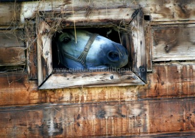 Gheorghe_Petrila - La fereastra - Budesti