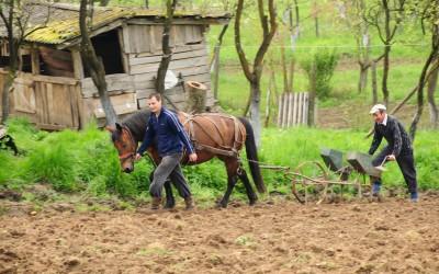 Țara Chioarului, Țara Lăpușului, Preluca veche (3/2007)