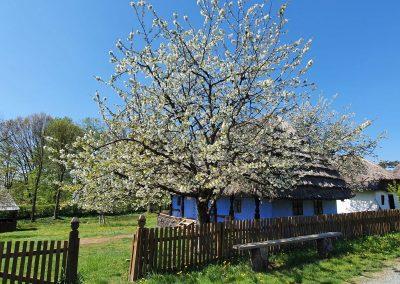 Sfântul Gheorghe – un altfel de hram la Muzeul Satului din Baia Mare – 23 aprilie 2020